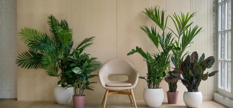 Kümme väärt toataime, mis puhastavad õhku mürgistest ainetest